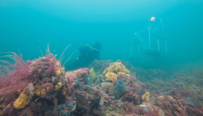 Seaweed research on a rising tide of optimism