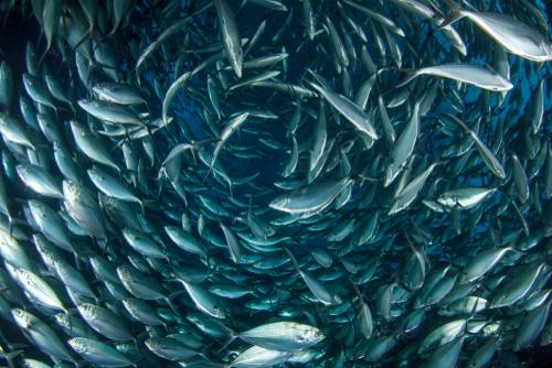 SafeFish 2018-2021